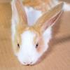 Comment lire les signaux de l'oreille de lapin