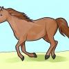 Comment reconnaître les différentes races de chevaux