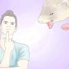 Comment réduire l'odeur furet