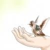 Comment libérer oisillons sauvages
