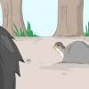 Comment sauver un oiseau chanteur, le faucon ou hibou