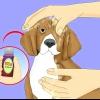 Comment débarrasser votre animal de puces