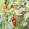 Comment économiser de graines de jardin