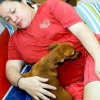 Comment gratter le ventre d'un chien