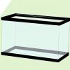 Comment mettre en place un aquarium de 10 gallons