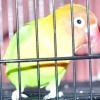 Comment mettre en place une cage pour un inséparable