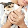Comment montrer de l'affection à un chat