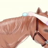 Comment montrer votre cheval que vous l'aimez