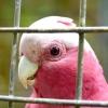 Comment socialiser un oiseau de compagnie
