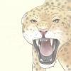 Comment survivre à une attaque de guépard