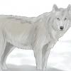 Comment survivre à une attaque de loups