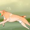 Comment prendre soin d'un chien boxer