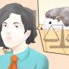 Comment prendre soin d'un hérisson