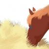Comment prendre soin d'un cheval ou un poney