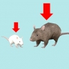 Comment prendre soin de souris animal