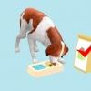 Comment prendre soin de votre chien de bretagne