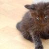 Comment prendre des photos de votre animal noir