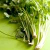 Comment préparer et à utiliser la racine de coriandre (coriandre racine)
