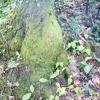 Comment arbres site pour éviter les problèmes de racines