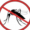 Comment prendre soin des patients atteints de la dengue