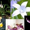 Comment prendre la bonne qualité fermer photographies de fleurs