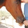 Comment parler à votre cheval