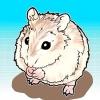 Comment apprivoiser un hamster de roborovski