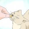 """Comment apprendre à un chat à """"high five"""""""