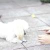Comment apprendre à un chien à ramper