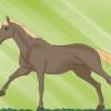 Comment apprendre à un cheval contre-galop
