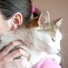 Comment enseigner à votre chat pour parler