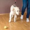 """Comment enseigner à votre chien """"par"""""""