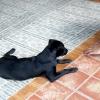 Comment enseigner à votre chien à répondre à la main signaux