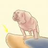 Comment enseigner à votre chien à surfer