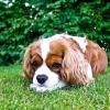 Comment enseigner des trucs à votre chien
