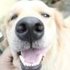 Comment savoir si votre chien a des crises d'épilepsie