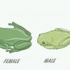 Comment savoir si votre grenouille d'arbre est mâle ou femelle
