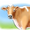 Comment dire quand une vache ou une génisse est en oestrus
