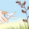 Comment ranger nouvelles usines de lin zélande