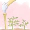 Comment attacher les tomates en utilisant l'armure floride