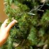 Comment tout-petits la preuve de votre arbre de noël