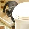 Comment toilette former votre chat