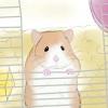 Comment former un hamster bébé