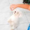 Comment former un chien de se lever