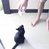 Comment former votre chat pour aller chercher une souris jouet