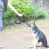 Comment former votre chien avec des signaux silencieux