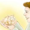 Comment former votre hamster à venir lorsque vous appelez
