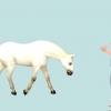 Comment former votre cheval pour le maréchal-ferrant