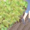 Comment traiter une piqûre d'une ortie