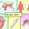 Comment traiter le paludisme